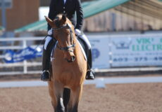ADA Fall Show – Manager's Letter and Ride Times