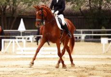 ** NEW **   2021 AZ Dressage State Championships Horse Nomination Form
