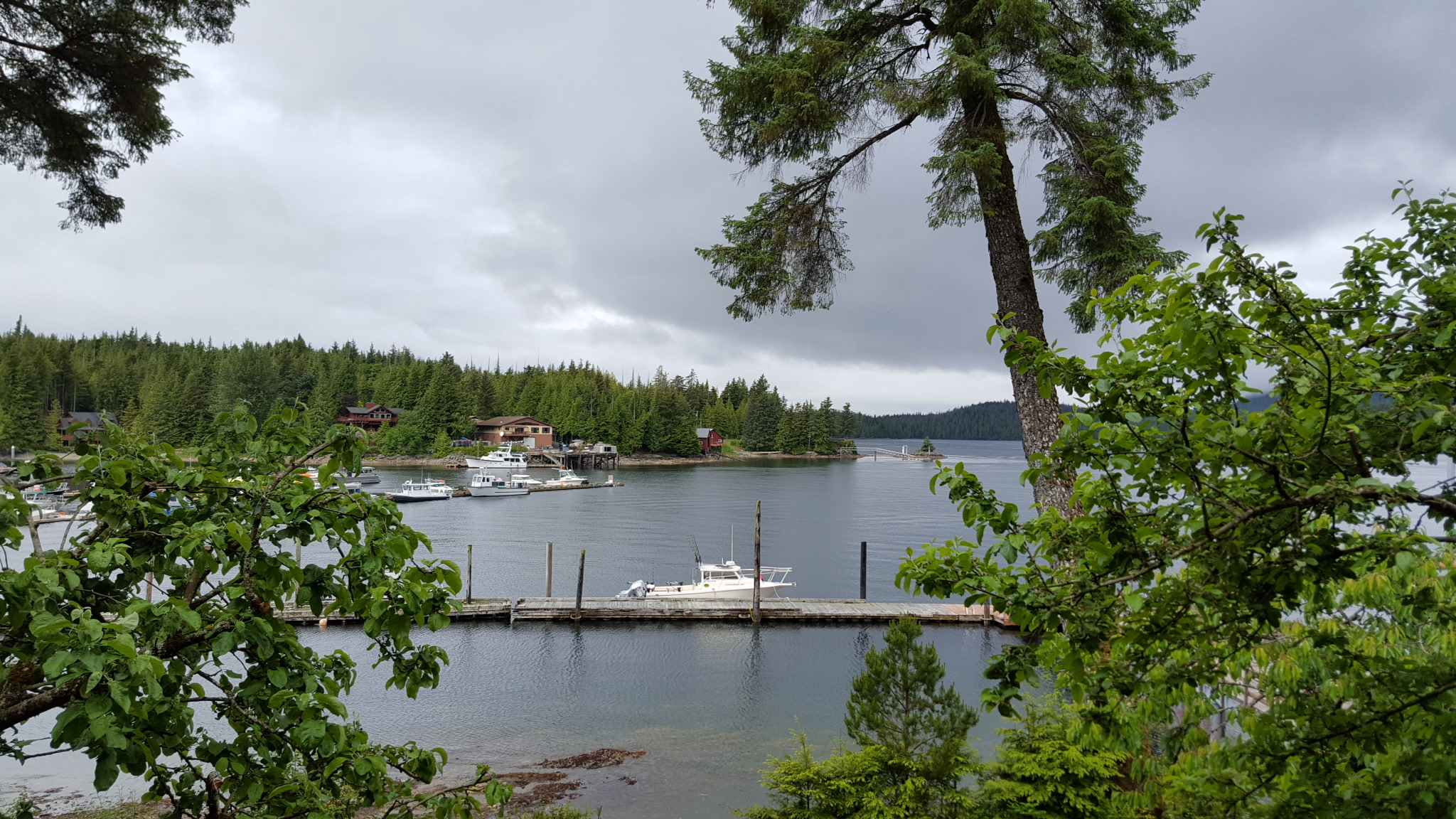 Waterfront View of Knudson Cove Marina