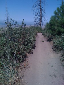 Trail 4, looking NW.