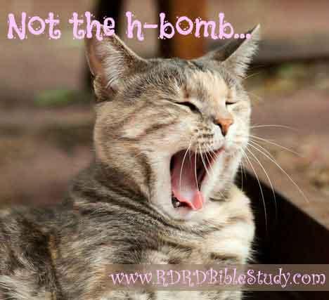 RDRD Bible Study cat yawning at history