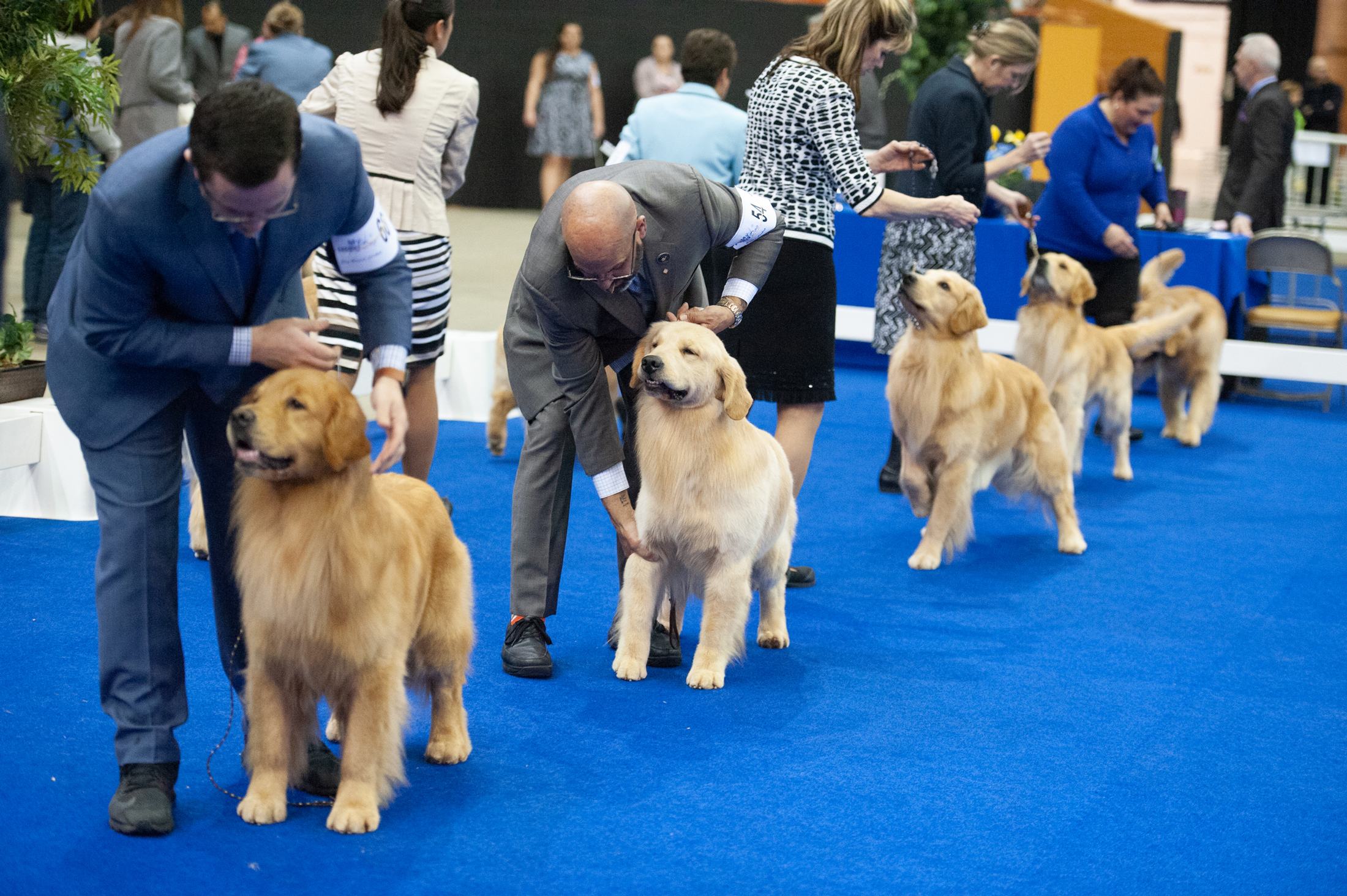 Golden Gate Dog Show