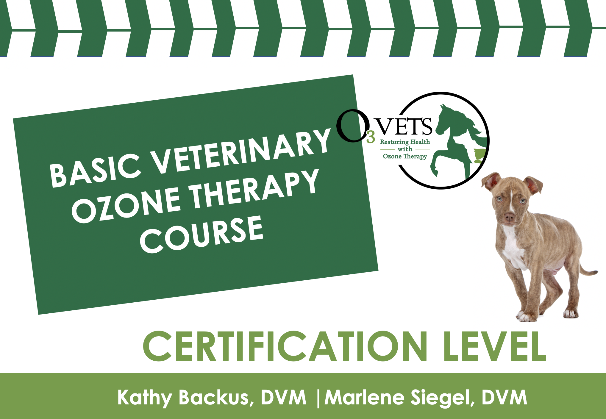 Basic Veterinary Ozone Therapy Course