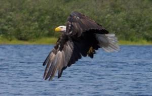 eagle_00