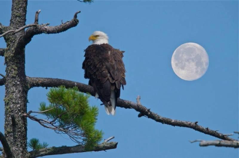 eagle_03