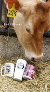 Brown Cow at Fort Hill Farms