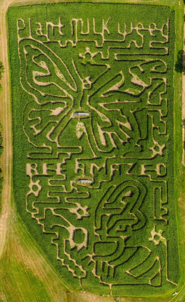 Fort Hill Farms 2020 corn maze is a tribute to the Monarch Butterfly