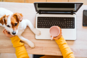 young woman working on laptop at home, wearing protective mask, cute small dog besides. work from home, stay safe during coronavirus covid-2019 concpt