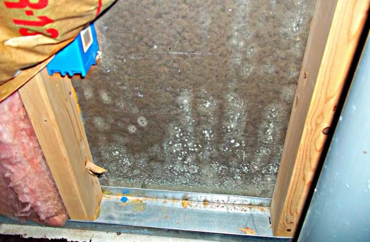 Mold Removal In Home