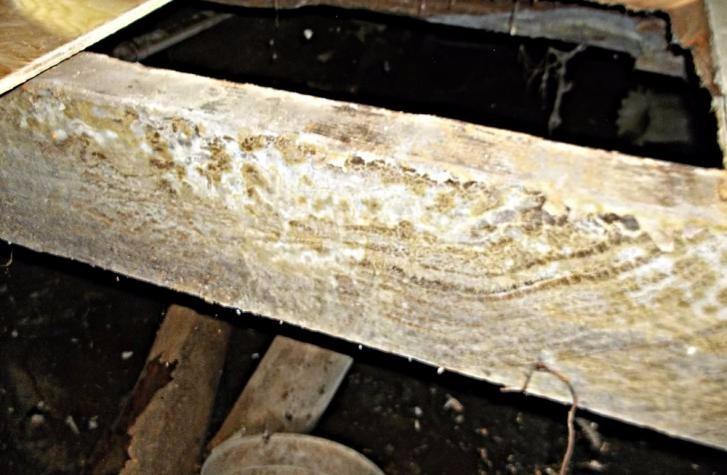 Mold Spores in Attic Removal