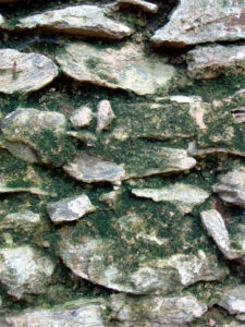 Delaware County mold damage remediation