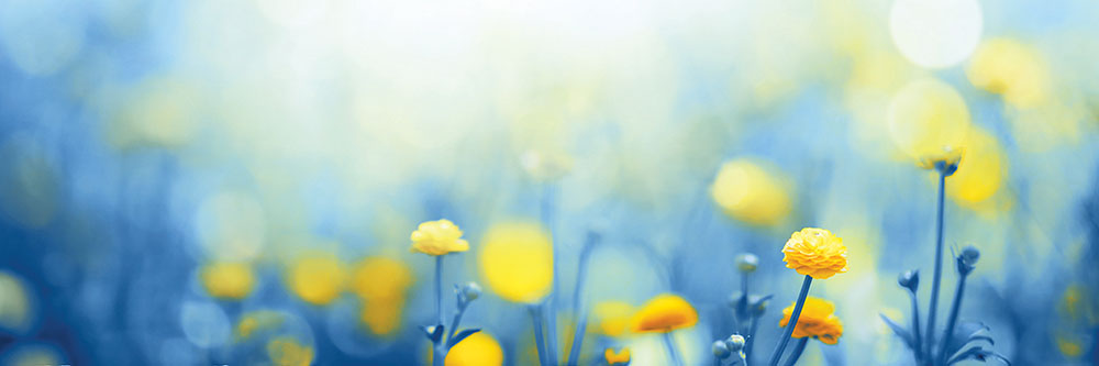 A Practical Guide to Living with Hay Fever and Allergies