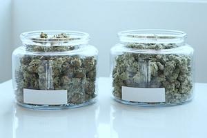 Michigan Cannabis Licensing