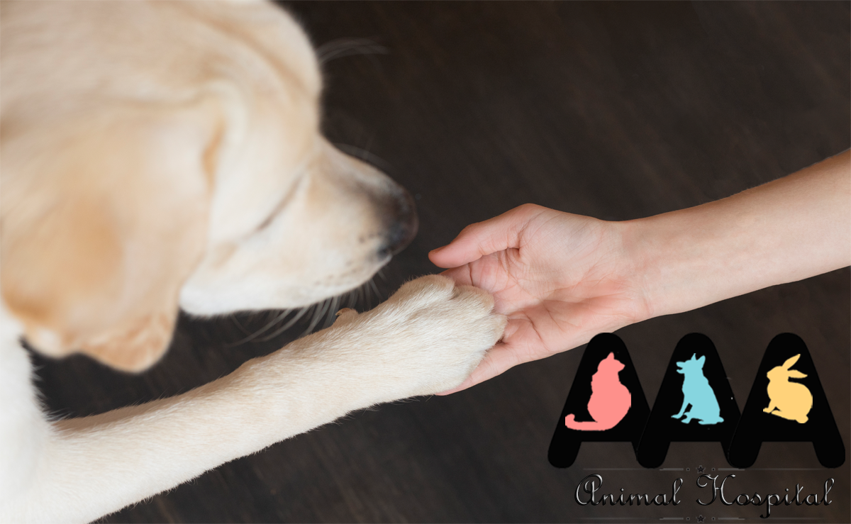 Responsible Pet Owners Month