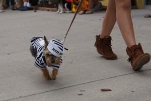 Bad Dog Costume Contest at Wag Natural Pet Market 2012