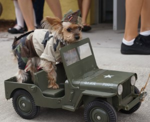GI Jane Dog Costume Contest at Wag-O-Ween