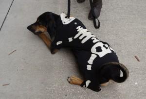 Skeleton Dog Costume Contest at Wag Natural Pet Market 2012