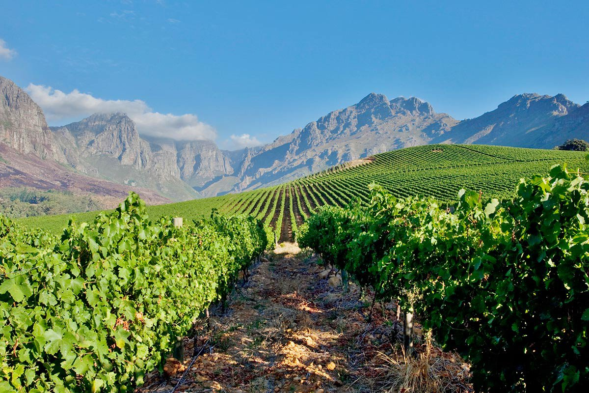 south african chardonnay