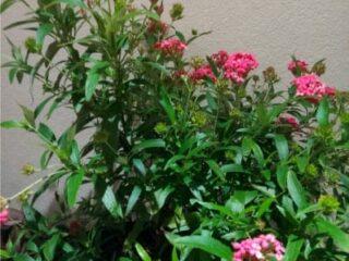 Jan-2019-FloweringPlant