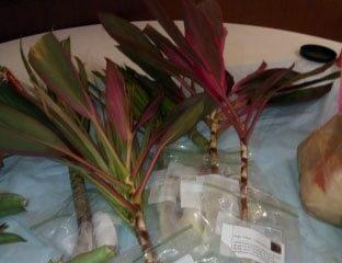 PlantSwap_Jan2019-(2)