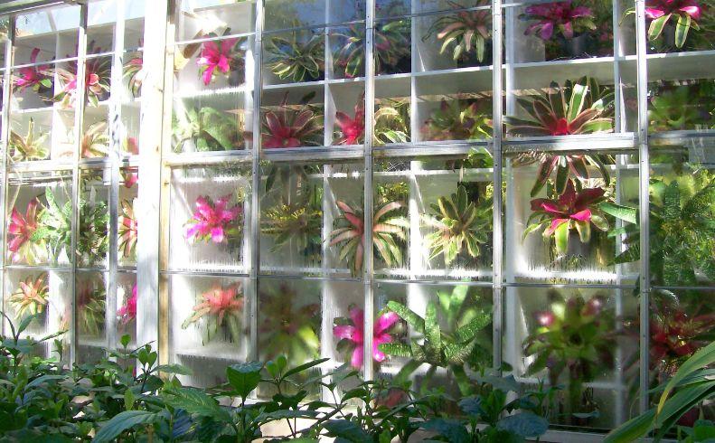 Bromeliad Exhibit Conservatory
