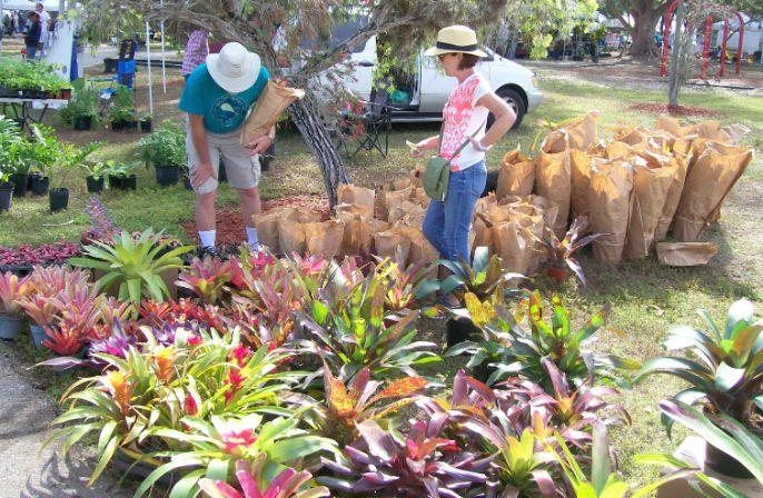 Bromeliad Vendor