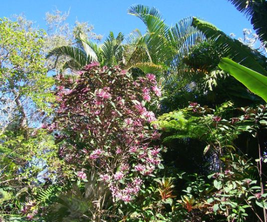 Marie Selby Gardens view