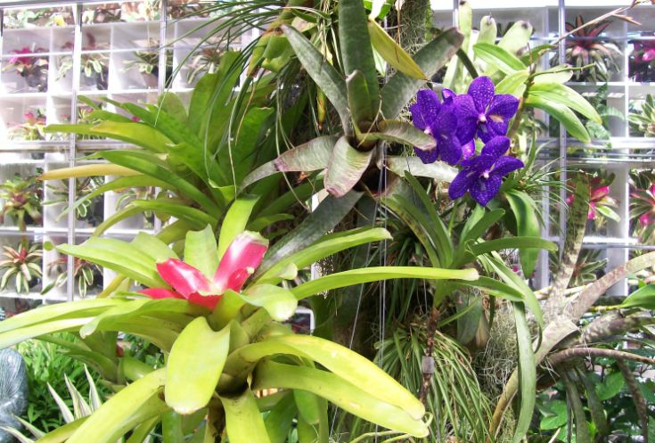 Orchid Bromeliad display outside conservatory