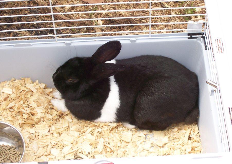 Rabbit Visitor
