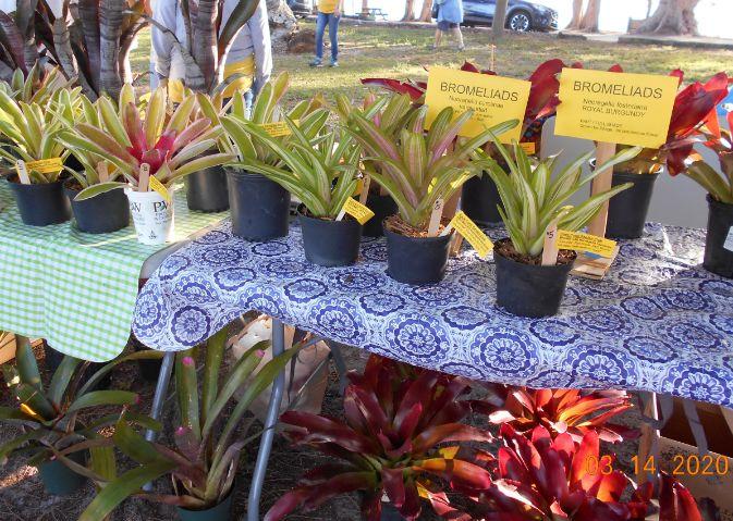 Bromeliad Sale