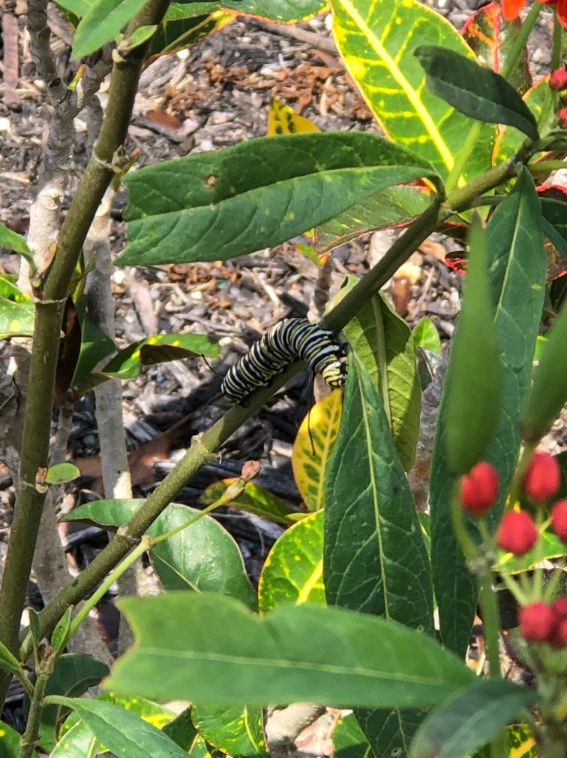 Butterfly on Milkweed - Ann Block