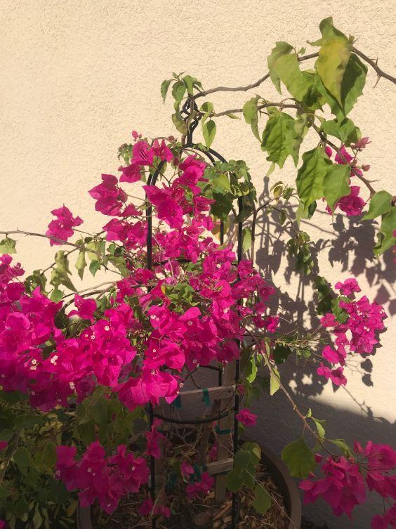 Blooming Flowers Charisse Schreiner
