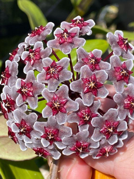 Pink and White Flowers - John Hampton