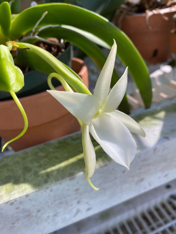 Orchid - John Hampton