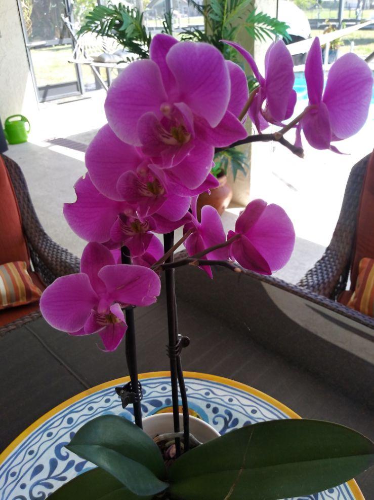 Orchid - Lillian Peterson