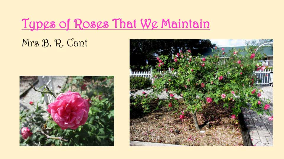 October Meeting 2020 - Rose Garden - 12