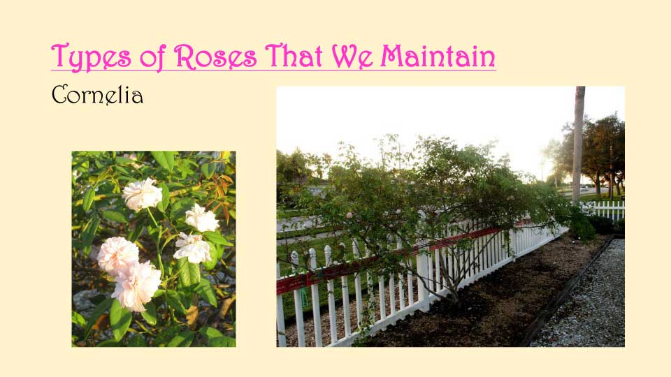 October Meeting 2020 - Rose Garden - 14