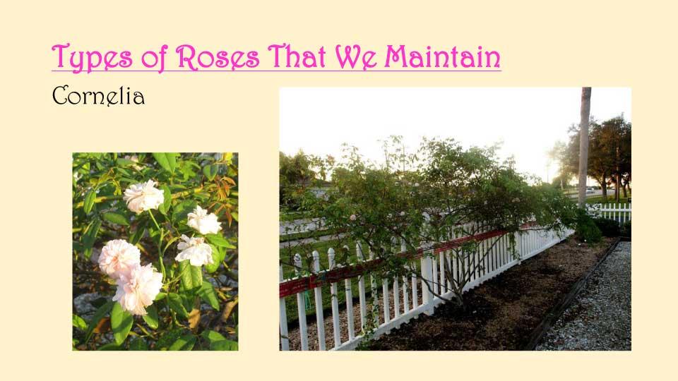 October Meeting 2020 - Rose Garden - 14