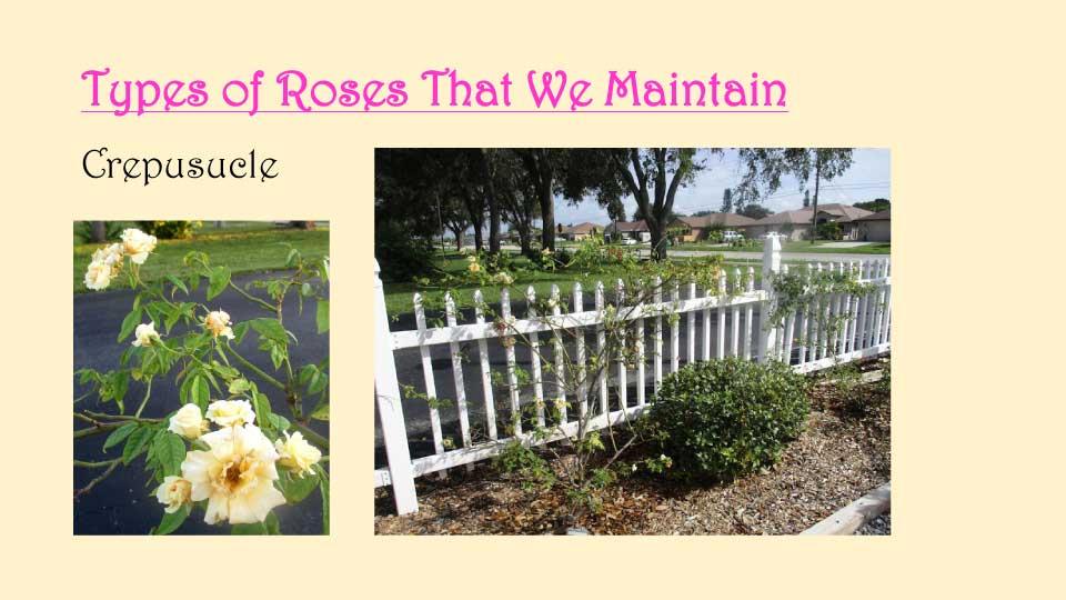 October Meeting 2020 - Rose Garden - 15