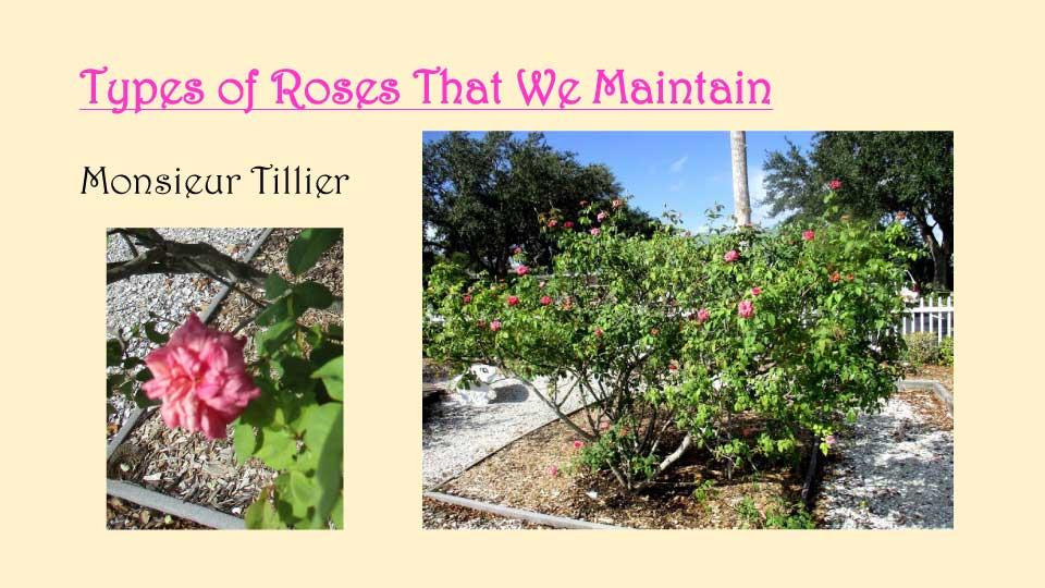 October Meeting 2020 - Rose Garden - 16