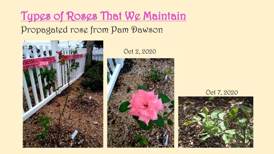 October Meeting 2020 - Rose Garden - 17