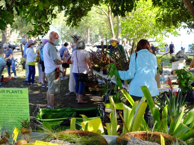 People browsing plants for sale