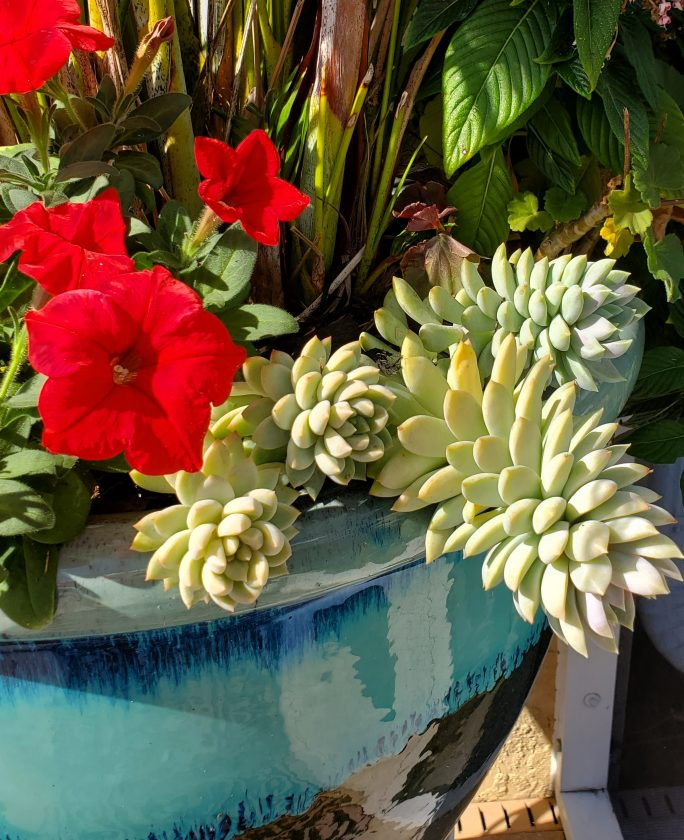 Gardening success with succulents — Cathy Dunn