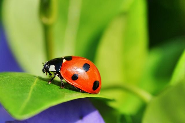 Florida Friendly Landscaping Principle #6:  Manage pests responsibly