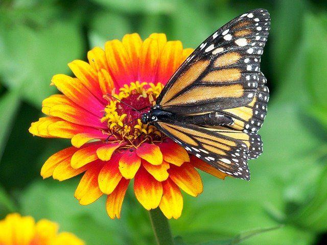 Magical monarchs — Cathy Dunn