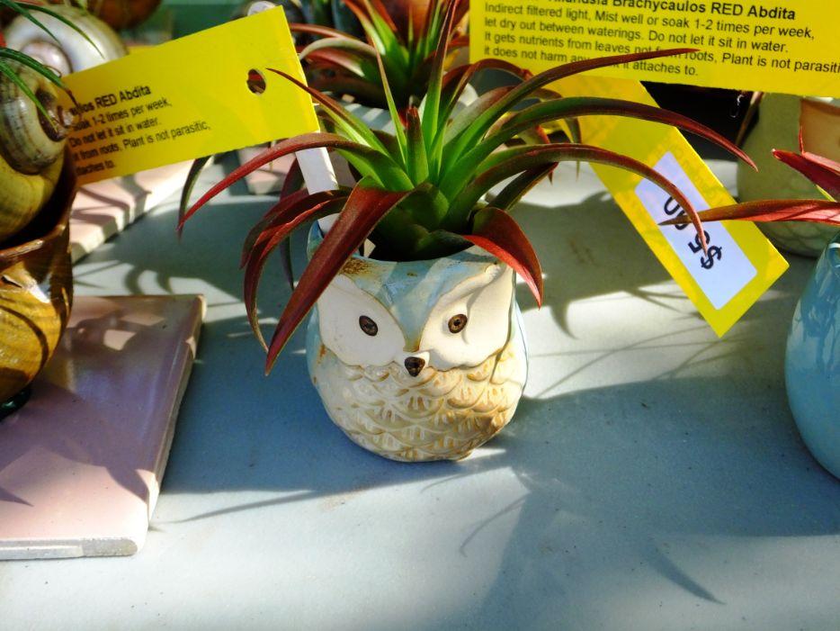 Owl plant holder