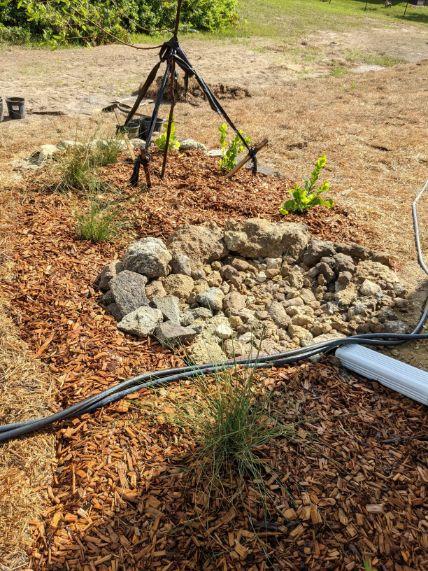 Varnish leaf drainage area M