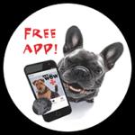 PetWow App - Mobile Pet Services Near Me - PetWow