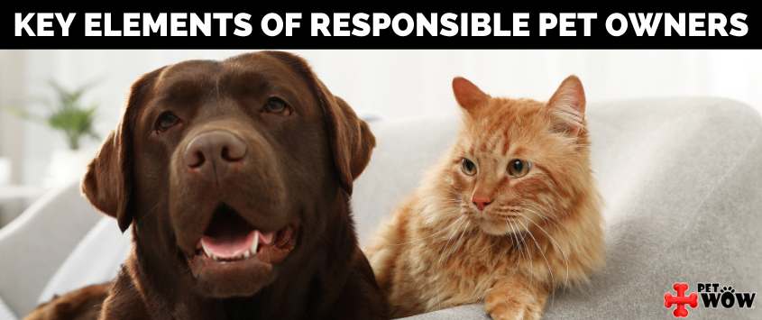 Key Elements Of Responsible Pet Owners
