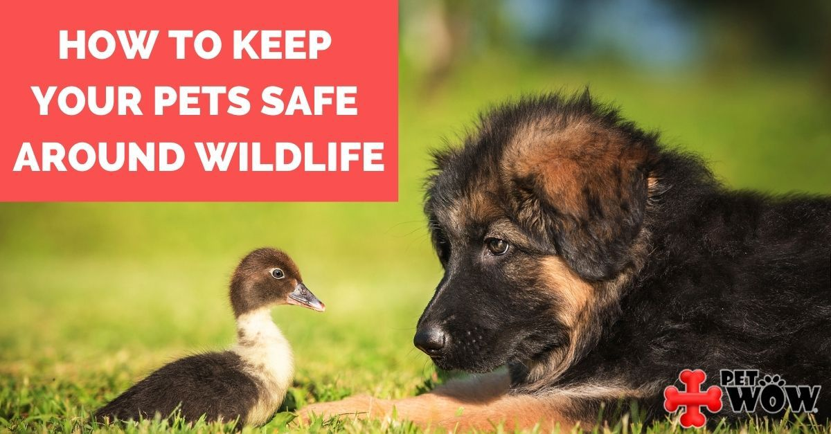 How To Keep Your Pets Safe Around Wildlife